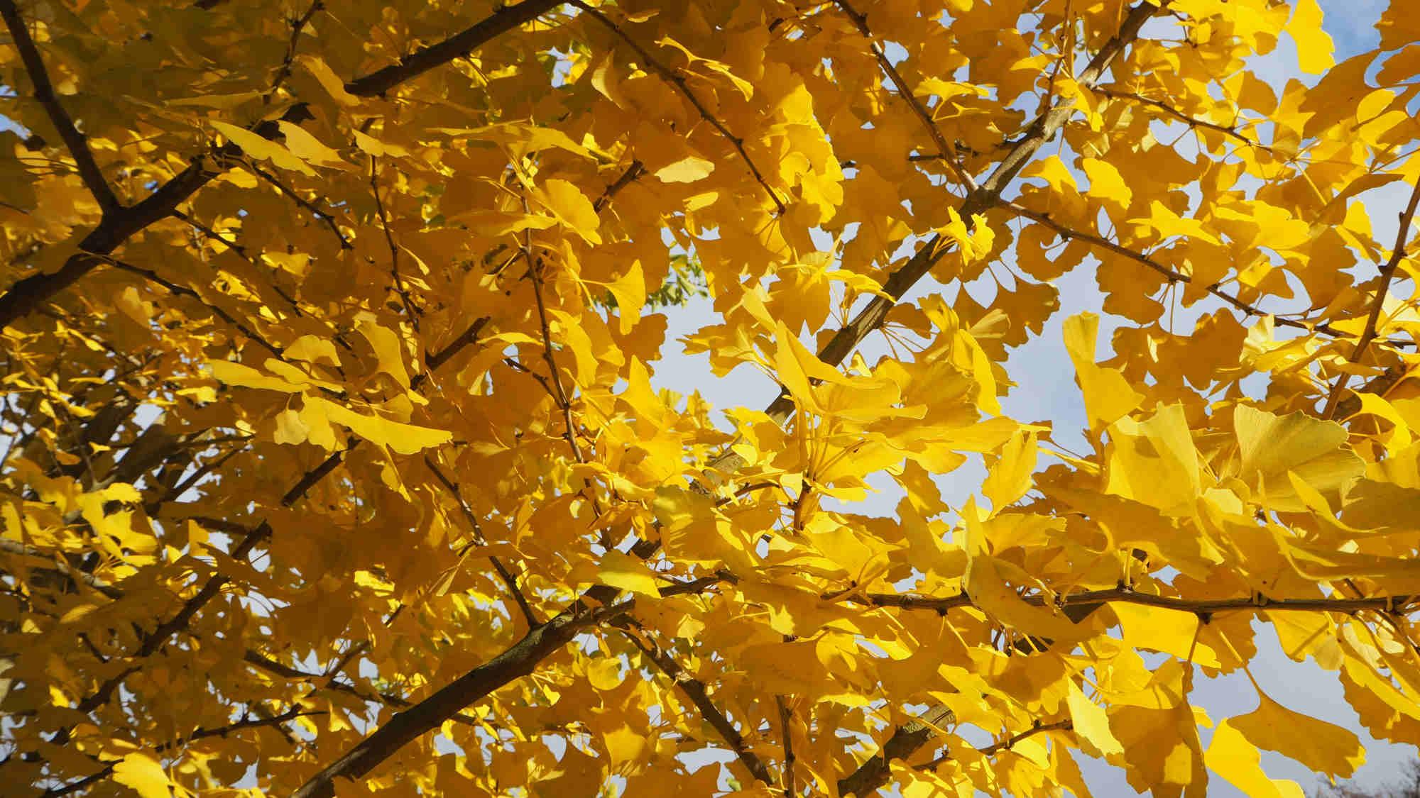 .. . Blätter im Herbst. ..