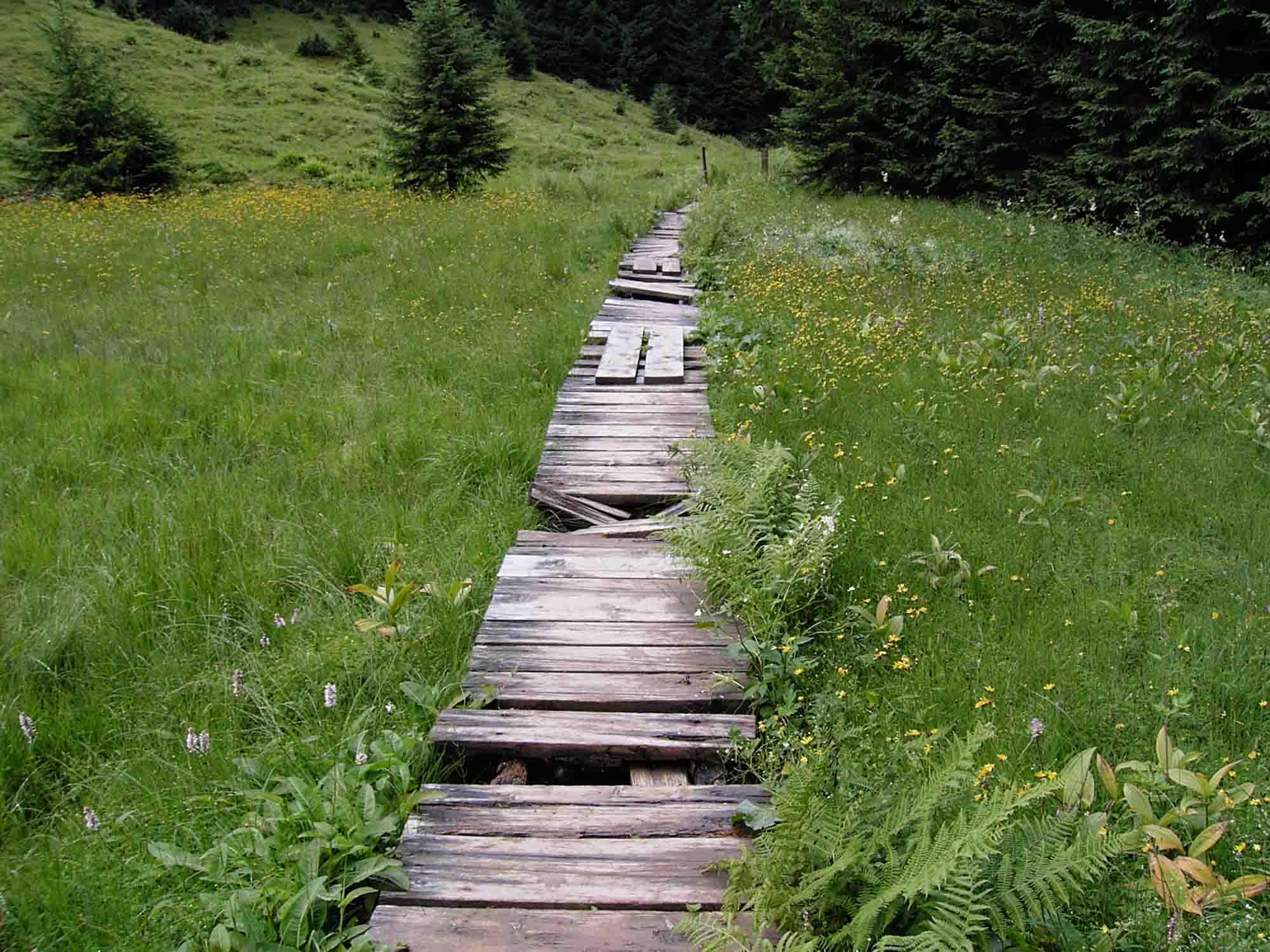 .. . ein Weg mit Hindernissen. ..